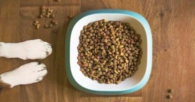 dog food for sensitive skin
