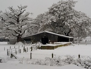 A cold winter morning on Oathall Farm