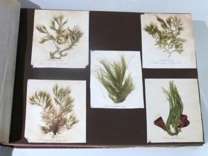 Seaweed album6
