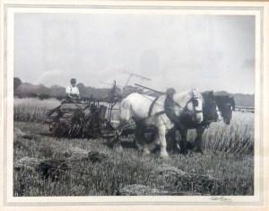 Field Scene