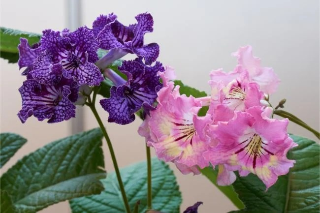 19 Flowering Houseplants That Are Absolutely Stunning Smart Garden Guide
