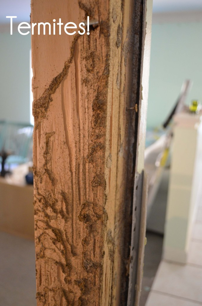 Evidence of termite damage