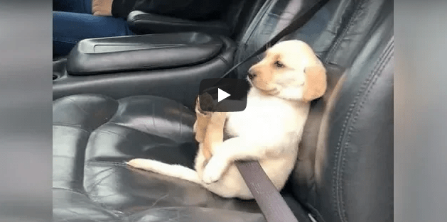 Animals could be really funny a times in funny videos 2019
