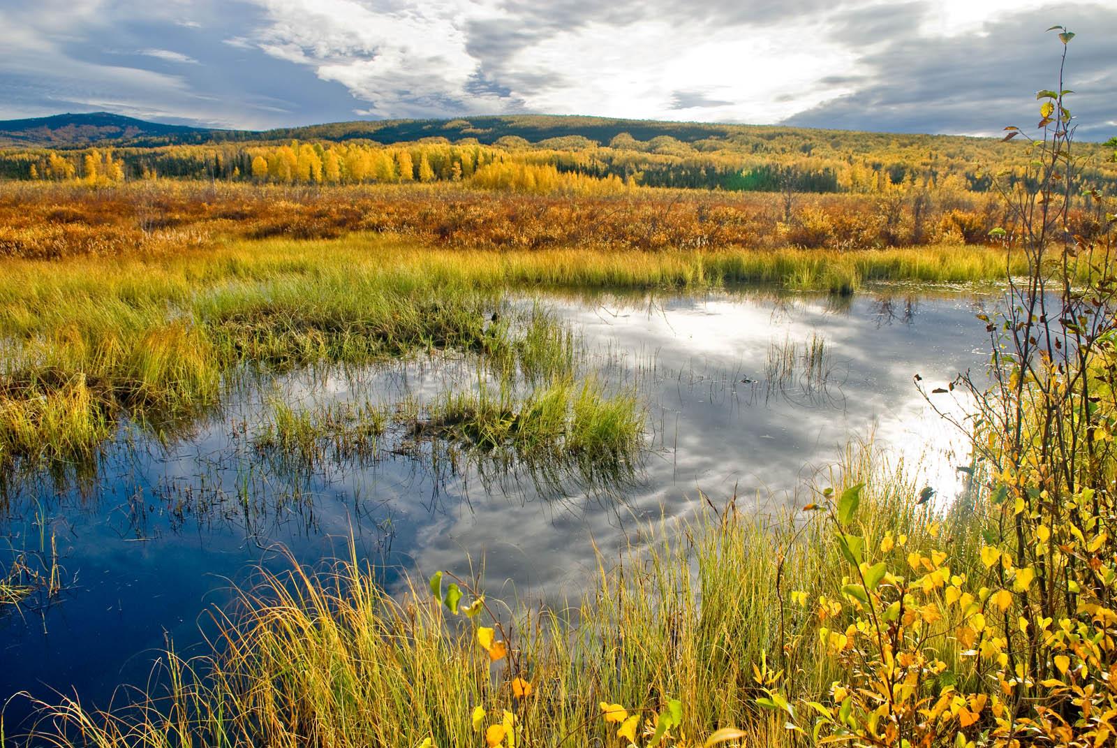 Epa Wetlands