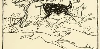 Irish-Fairy-Tales-by-James-Stephens-11
