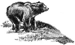44 HOW THE WOMAN OVERCAME THE BEAR