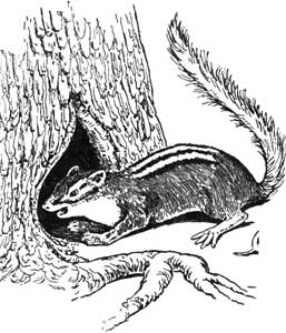 WHY THE CHIPMUNK HAS BLACK STRIPES – Stories the Iroquois Tell Their Children by Mabel Powers