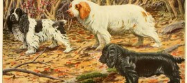 COCKER SPANIELS, CLUMBER DOG and FIELD – Information About Dogs