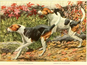 Read more about the article Foxhound Dog – Information About Dogs