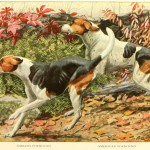 Foxhound Dog – Information About Dogs