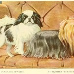 Read more about the article YORKSHIRE TERRIER – Information About Dogs