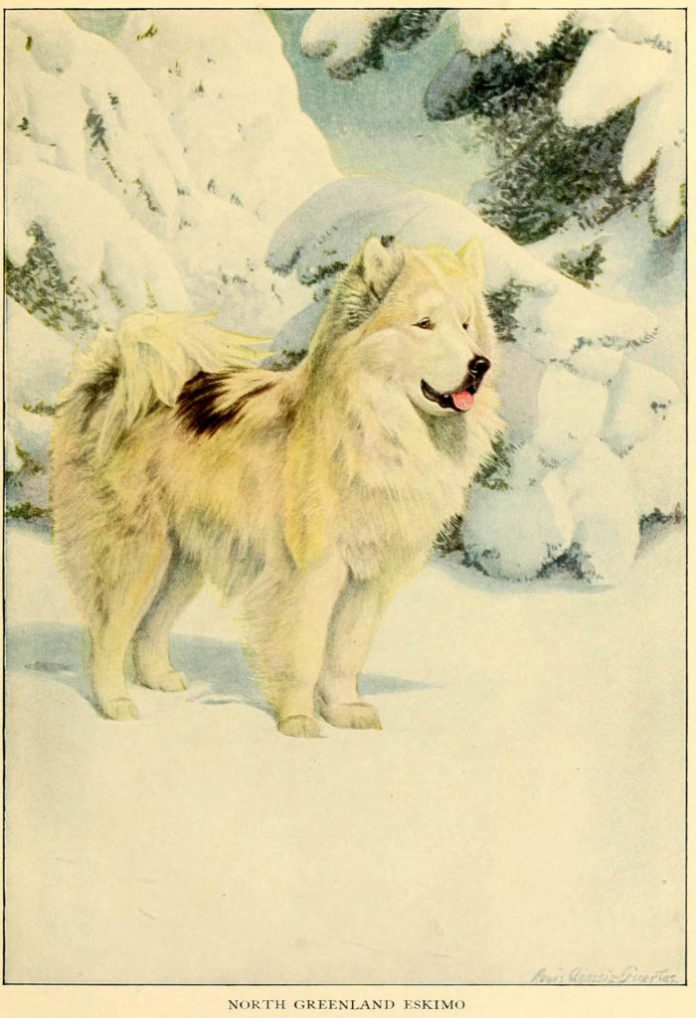 north greenland eskimo - information about dogs