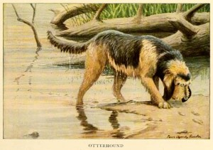Read more about the article Otterhound Dog – Information About Dogs