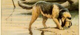 Otterhound Dog – Information About Dogs