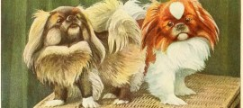 PEKINGESE DOG – Information About Dogs
