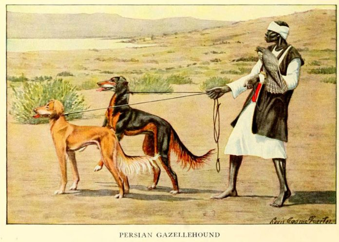 persian gazellehound dog - information about dogs