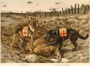 BELGIAN SHEPHERD DOG – Information About Dogs