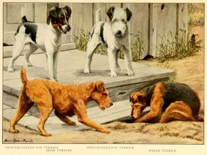 IRISH TERRIER – Information About Dogs