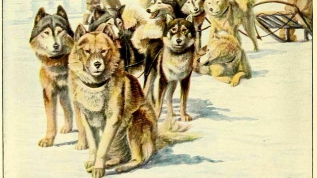 ALASKAN ESKIMO DOGS – Information About Dogs