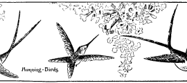 Art for kids to draw – Humming Birds