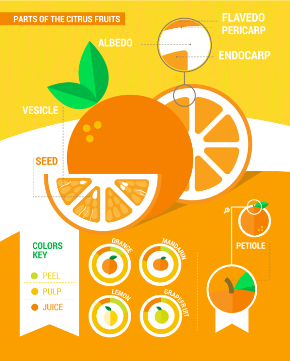 Arancia infographic