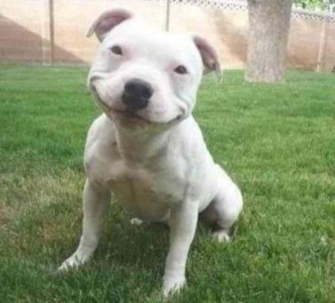Funny_Smiling_Dog