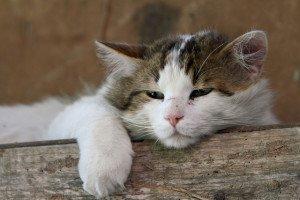 Physician Burnout - Courtesy Flickr