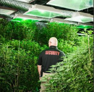 Marijuana Dispensaries Need Armed Security