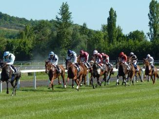 Trade horses pre race