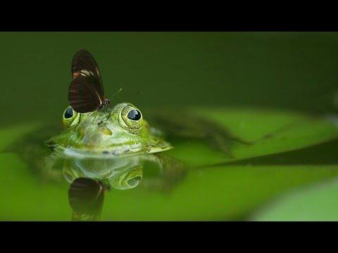 The World of Animals in 8K ULTRA HD|BRIGHT WORLD|