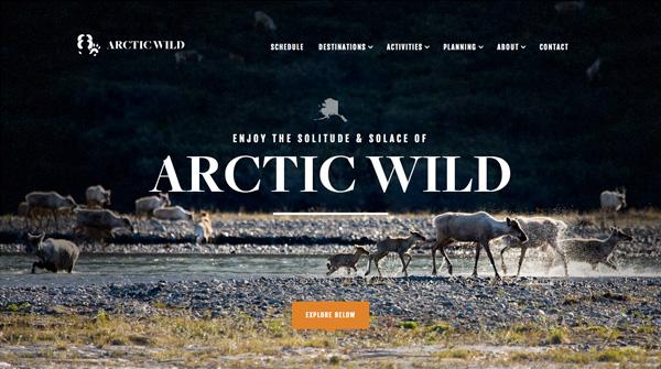 Arctic_Wild
