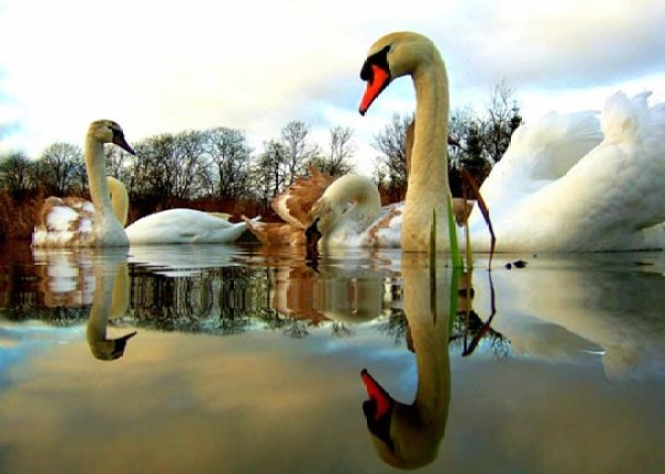 Reflective Photography
