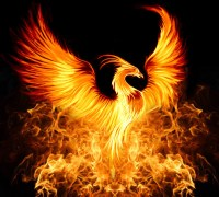 Phoenix flaming bird canstockphoto13933552