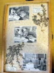 Dried Plants 1