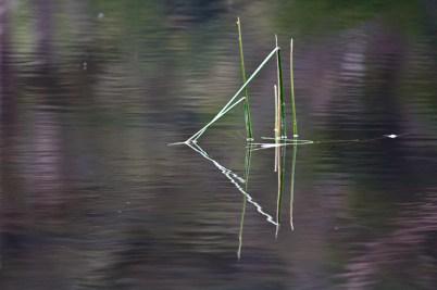 Water Reeds #2
