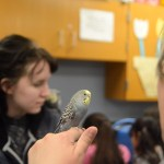 One of the kindergarten teachers holds a parakeet with senior Ellie Westoff playing with her bird in the background. Photo by Ty Browning