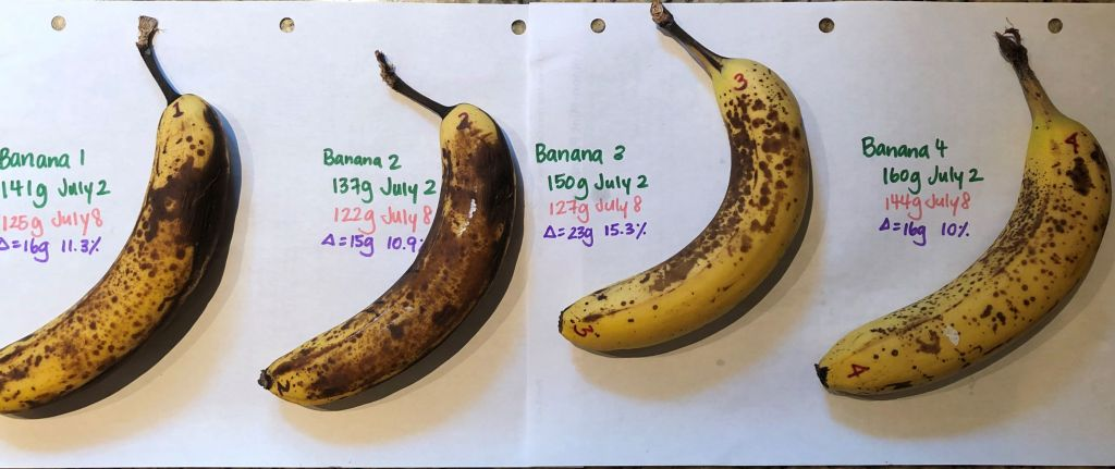 Comparison of ripening bananas for baking