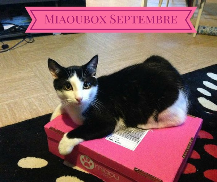 Miaoubox – Septembre 2015