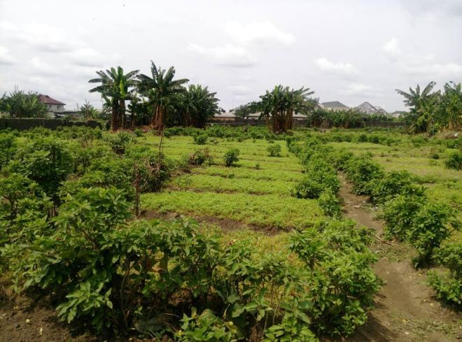 Peatuce to increase African local Food supply - Smepeaks.com