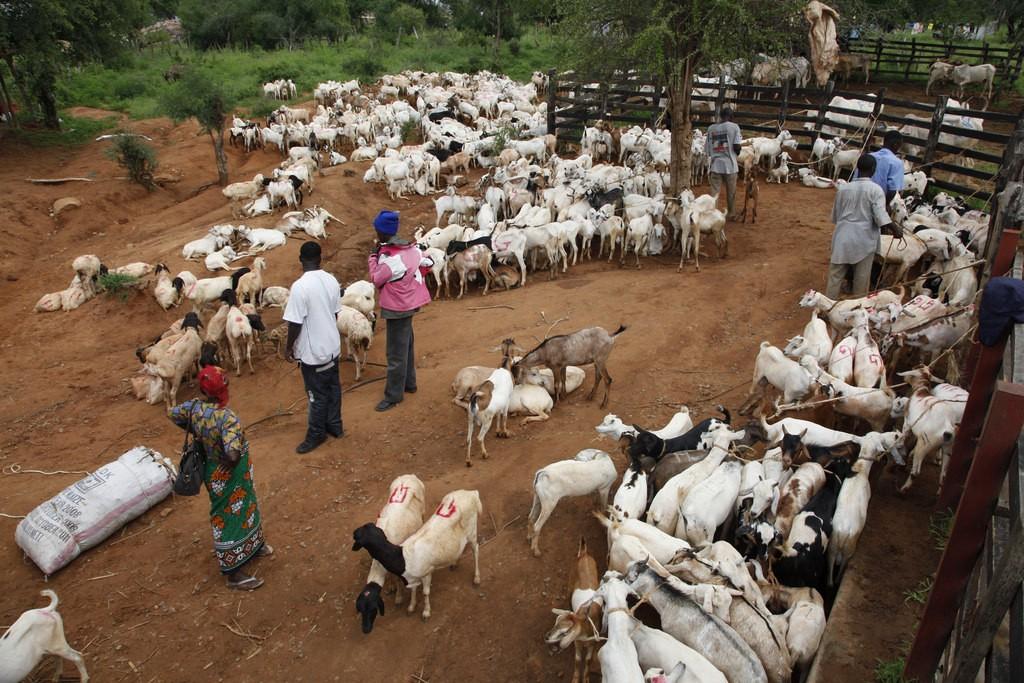 Livestock farming - Smepeaks