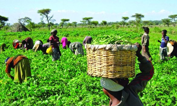 FG interest-free loans farmers