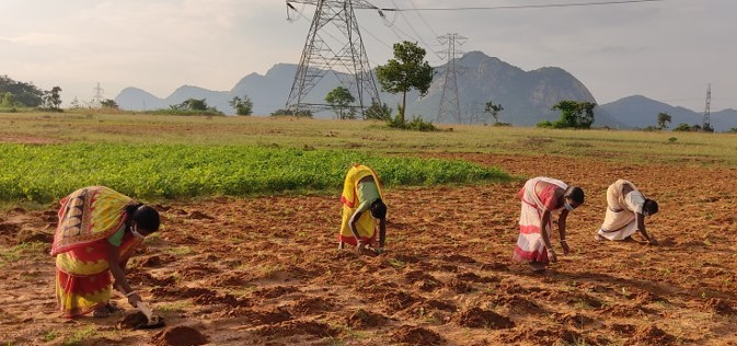 Walmart Foundation to Help India's Smallholder Farmers