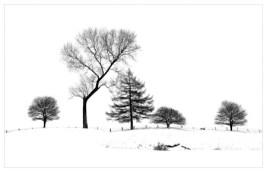 01 Tree Line