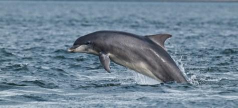16 Bottlenose Dolphin
