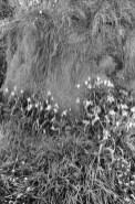 Ishatori hedgerow