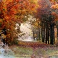 second-cold autumn glade-deborah degge