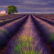 sps ribbon-line of provence-sergey aleshchenko-russian federation