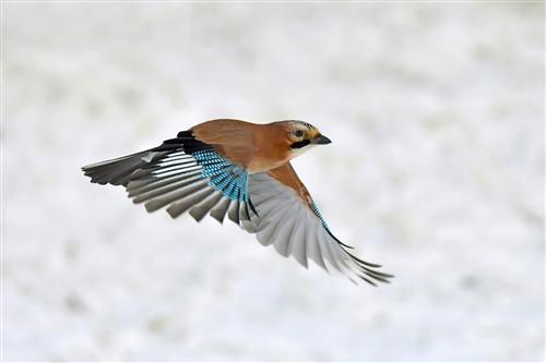 third-jay flypast-van greaves