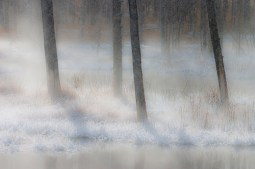 Four Trees in Mist
