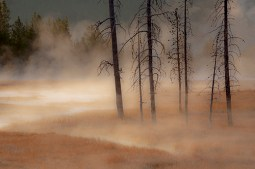 Trees and Autumn Grasses
